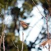 早朝の『舎人公園 自然観察園』