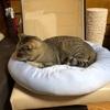 プーチンさんの夏支度 ~Nクールの犬猫用ペットベッドを買いました~