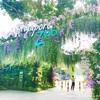 シンガポール旅行記★観光編!シンガポール動物園(Singapore Zoo)