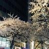 東京駅のさくら通りでお花見を☆桜を見ながらスタバのコーヒーを飲むなんて大人の贅沢!