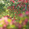 圧倒される赤いバラ:おとぎの森