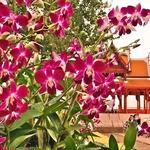 「カオサン」周辺の夕刻から夜にかけての見所ポイント~欄の花が咲き誇る「プラスメン要塞」、ライトアップ「民主記念塔」!!