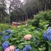 夢をみるなら冷たい傘のなかで『京都・三室戸寺』