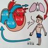 「生き物の心臓いろいろ」 理科好きな子に育つ不思議なお話365を読んだ感想