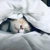 睡眠は大切!超一流の眠り方