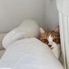 【猫学】猫同士の性別や年齢による相性は本当?シェルターの保護猫さんたちの事例をまとめました。