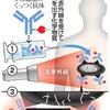 驚愕の癌治療法! 近赤外光線免疫療法