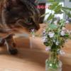 猫の好みは変わる?キャットミントと猫草