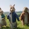 ウサギとカメレオン 6、7月に観た映画