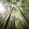 木に竹を接ぐ