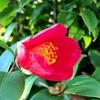 冬至の花たち