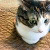 【愛猫日記】毎日アンヌさん#78