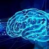 脳とコレステロールの関係【個人資料】 随時更新中