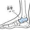 足首の痛みの原因は?