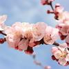 花を、自然を、愛でる気持ちを忘れたくない