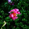 350  エグき花