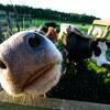 田舎暮らしを楽しんでいる人たちはこんな仕事をしてる【田舎暮らしの仕事の探し方】