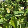 【北海道の家庭菜園】苗を植えました~成長記録2020年5月編🍃