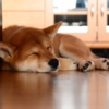『睡眠の質が上がる心理学的ナイトルーティンTOP3』を参考に夜のタイムテーブルを考えてみる。