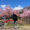 ブロンプトンに乗って「相模川自然の村公園」の河津桜を撮ってきた。
