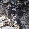 イネワラ堆肥BOXにある堆肥を使ってみた