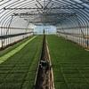 播種19日目の苗と耕起ラストスパート