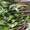 山菜シドケのおひたしの作り方