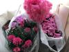 ひな祭りに桃色の花