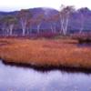 憧憬の地 ・尾瀬 ― 紅葉のブナ原生林と高層湿原を見る