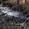 春まだ遠い井頭公園のコゲラ