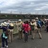 谷津干潟の探鳥会に行ってきました1