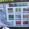 フラワーフェスティバル @国営昭和記念公園