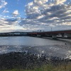本日のライド 江戸川宝珠花橋まで往復107km