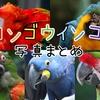 【写真集#10】イロトリドリ、コンゴウインコの写真まとめ【動物園】