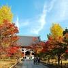 【紅葉】東福寺大慧殿と智積院の紅葉【散策】