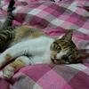 299   家猫みいちゃんの1月