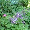 きょうの庭。。。