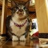 テーブルの下のネコ
