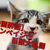 (ネタバレなし)「ランペイジ 巨獣大乱闘(2018)」特盛の肉料理を食べ尽くしたような満足感!
