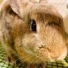 ウサギのちまきお気に入りのモグモグおやつ