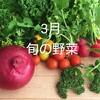 3月の旬の野菜