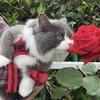 ☆花 バラ🌹 薔薇園  & 猫