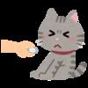 猫が薬を飲んでくれない!そんなとき活躍する投薬補助グッズの紹介