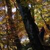 和宏口福遊山09秋 秋色を頂く