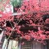 松本市内公園・寺社巡り Part2