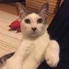 【保護猫】現在の様子と状況