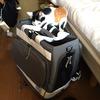 一人暮らしの猫飼い 防災グッズを見直す
