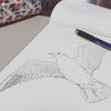 鳥を描く。