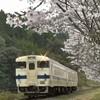 日田彦山線 筑前岩屋駅の桜