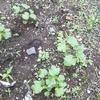 家庭菜園の様子と今後の展望